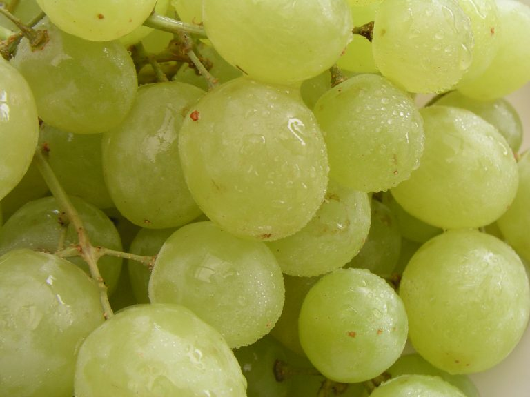 fruit of the month: grapes
